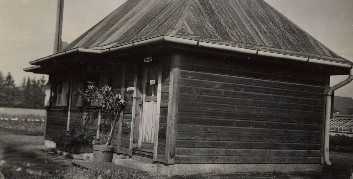 Obóz koncentracyjny w Dachau. Na plantacji ziół