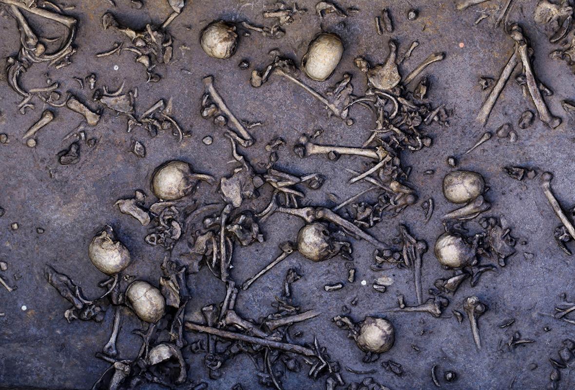 Fragment terenu wykopalisk nad Dołężą z widocznymi licznymi szczątkami ludzkimi, należącymi głównie do młodych mężczyzn.