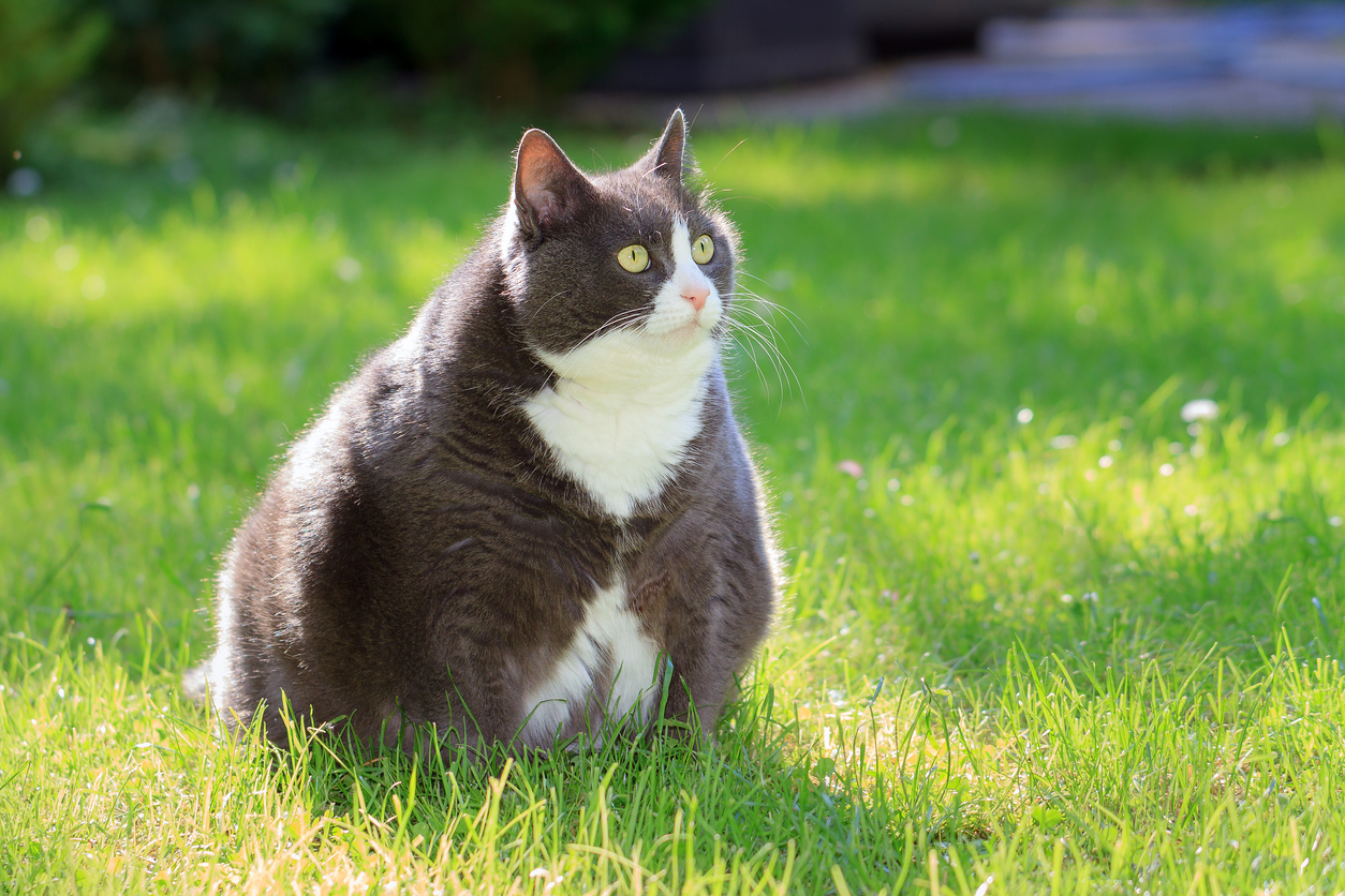 getting rid of cat urine odor in carpet