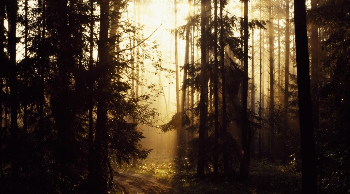 """Puszcza Białowieska w promieniach słońca. Michał Książek: """"Puszcza to polski las historyczny. Nie powinien być traktowany jak zwykły las gospodarczy"""""""