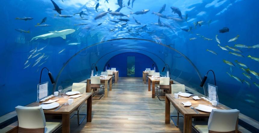 Posiłek w towarzystwie rekinów
