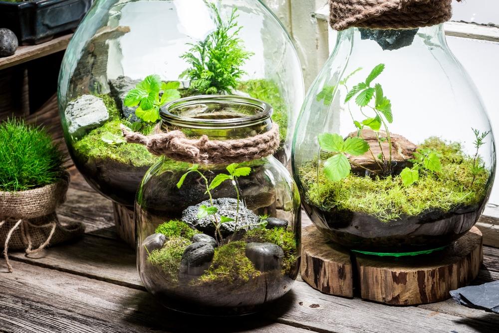 Ogród w szkle krok po kroku
