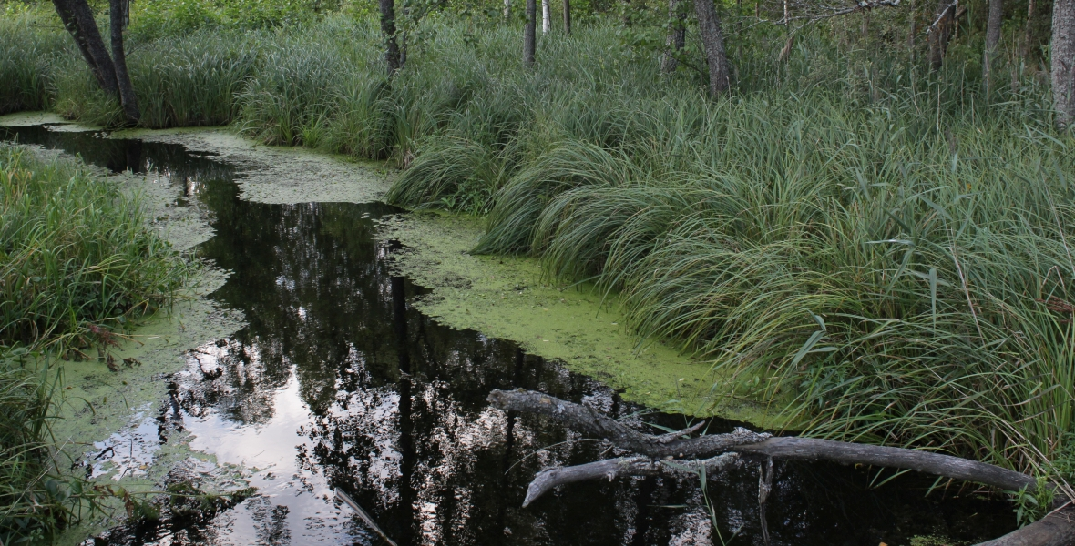 Snopkowskie Bagno niedaleko jeziora Śniardwy